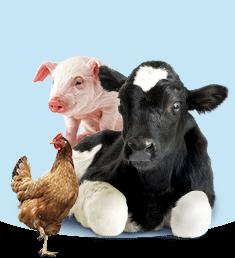 Ветпрепараты для животных