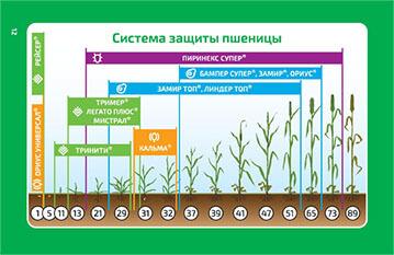 Применение СЗР на пшеницу