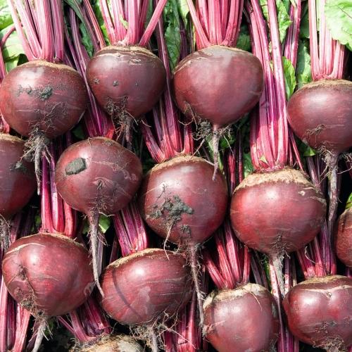 Семена свеклы Боро купить оптом