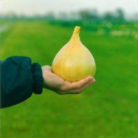 Семена лука Эксибишен купить оптом и в розницу