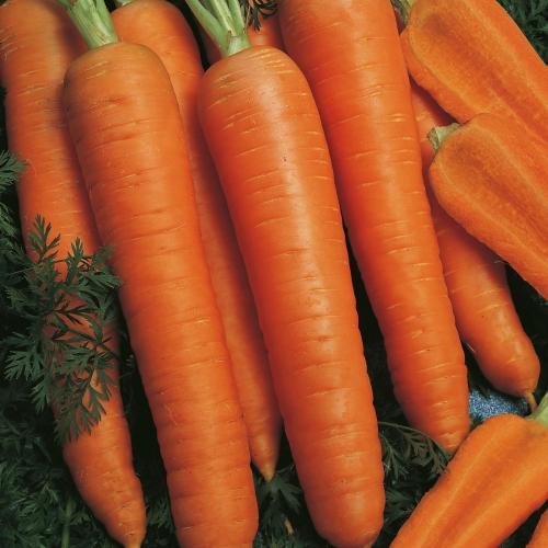 Предлагаем купить семена моркови Наполи F1 в Минске