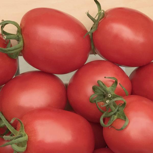 Томат Бенито - купить семена помидор Бенито