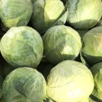 Капуста Бруно - купить семена капусты Бруно