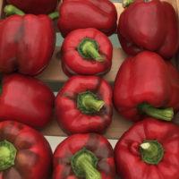 Перец Стенли - купить семена в Минске