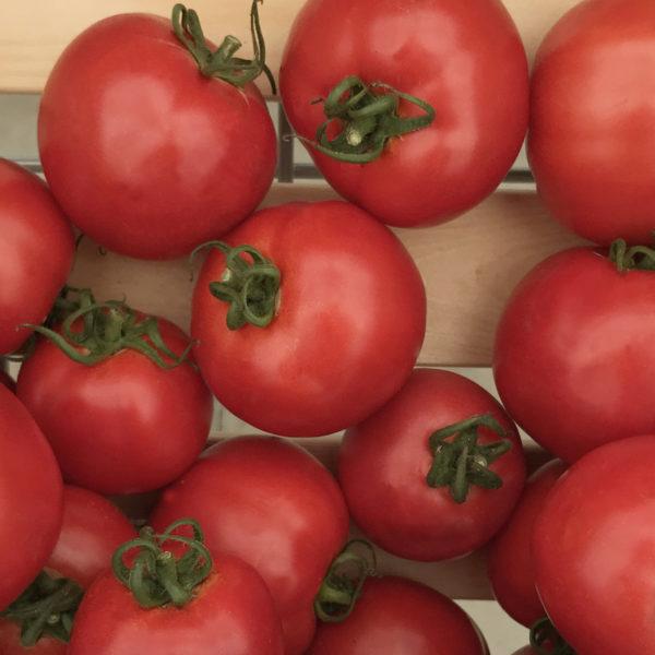 томаты Султан - купить семена в Минске