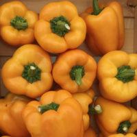 Семена перца Турбин F1 купить в Минске
