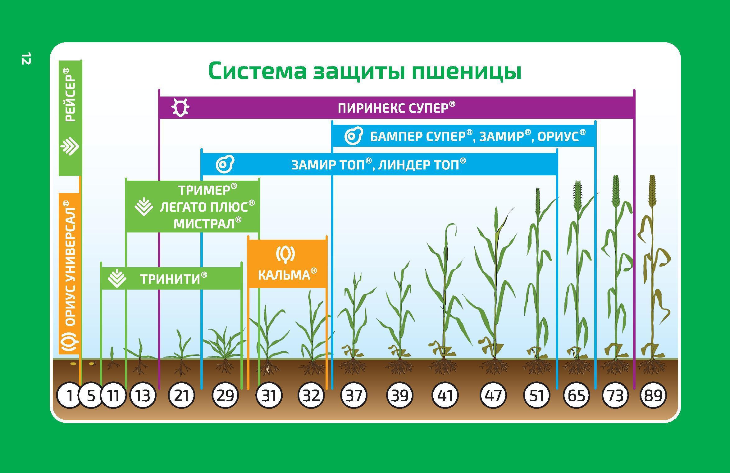 схема применения система защиты пшеницы