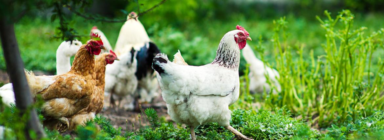 Аминокислоты для животных